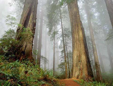 Bosques del Planeta (481x367)