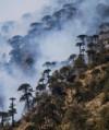 Desastre ecologico en el sur de Chile tras incendios forestales en bosques milenarios